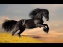 Дикие животные Жеребцы пустыни Намиб Африка Документальный фильм Nat Geo WILD