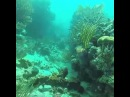 Underwater ScubaDiving USVI sports goproadventures gopro vineturkiye travelvine traveltheworld
