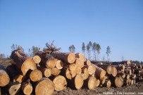 07 мая 2011 - Майский лес Тольятти