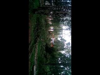 сегодня в парке выступает группа лесоповал