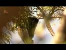 Эволюция Битва за жизнь / Evolve / 2008 / 01. Зрение