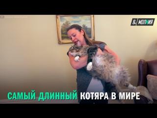Самый длинный кот. Книга рекордов Гиннесса