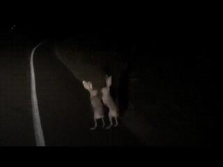 ночные разборки на дороге