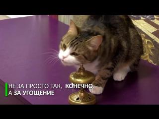 Петербургский кот извлекает квадратные корни из чисел