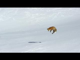 Трейлер самого дорогого фильма о дикой природе
