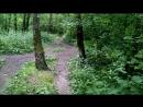 Тропинка в Гурьяновском лесу 5