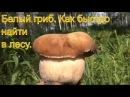 Поход в лес белые грибы ищем по запаху 18 июля 2017 белый гриб легко найти тайга природа выживание