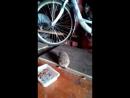 Ёжик кушает кошачий корм .
