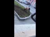 [Криминальный Владикавказ] Когда украл городскую в свое село