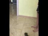 Кот паук