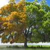 Лечение деревьев|Компания МОЖЕ