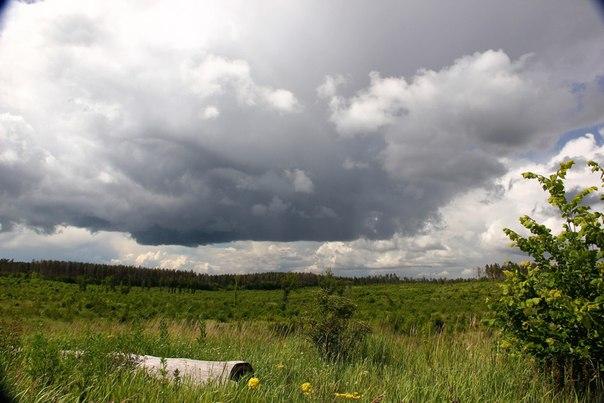 Тольяттинский лес и Куйбышевское водохранилище Фото: Сергей Павлов