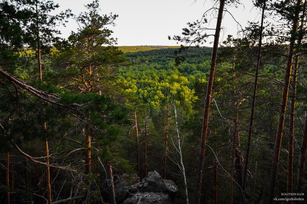 Лес поселка Передовой, Самарская область Фото: Игорь Колоткин