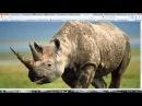 26 урок - Продвинутый моделинг в 3dsMax и Mudbox (Динозавр)
