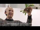 Мастер-класс Как пересаживать орхидею 3 разных вида Ботанический сад им. Гриш ...