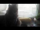 мой милый котик