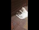 Как это милособака играет через дверь с кошкой