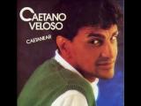 O quereres - Caetano Veloso