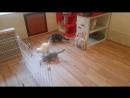 Кошки обожают играть с лазерной указкой