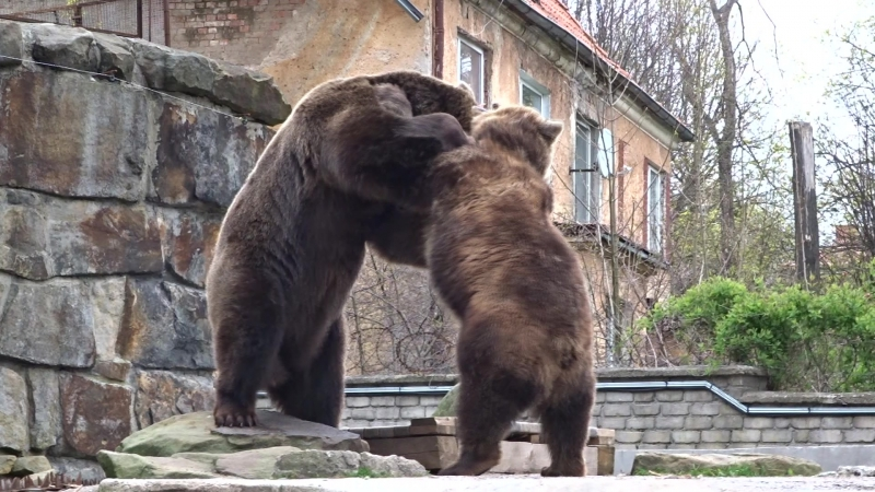 Дружная семейка. Зоопарк Калининграда. 2017 год.