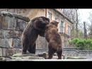Дружная семейка Зоопарк Калининграда 2017 год