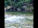 Сплав на плотах по реке 🐳