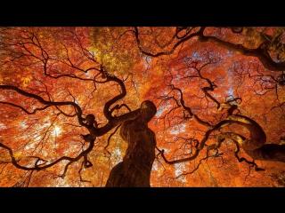 Краски осени в Японии
