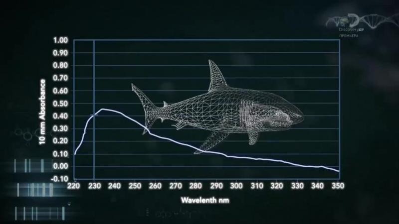 Неделя акул 1 серия. Акулы-убийцы / Shark Week (2017)