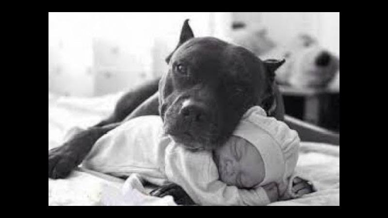 Bebekleri koruyan köpekler / Dog Protecting Baby