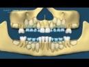 Заговор на рост новых молодых зубов