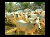 Jay Radha Madav Manish Vyas