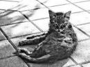 Очень грустная песня про кота До слёз😢😢😢😿😿!!