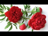 ABC TV How To Make Red Charm Peony Paper Flower From Crepe Paper - Craft Tutorial