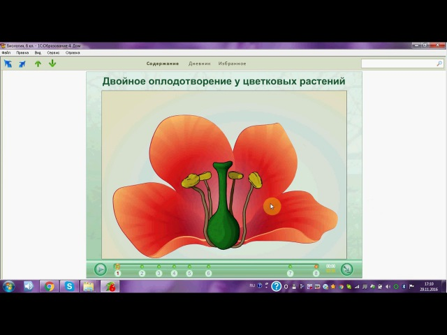 Двойное оплодотворение у цветковых растений. ОГЭ. ЕГЭ. Биология.