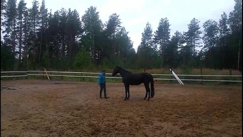 И только лошади летают вдохновенно.....
