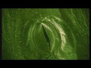 Органы дыхания у растений - устьица (макросъёмка)