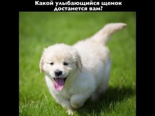 Сделайте скриншот, чтобы узнать какой щенок достанется вам