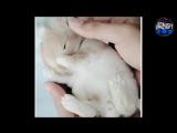 Приколы 2017- УГАРНЫЕ ПРИКОЛЫ ДО СЛЕЗ - Новые смешные видео - лучший тест на пси