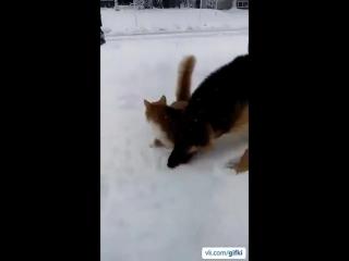 Кузя, ныряй!