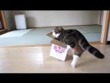 Котики и емкости