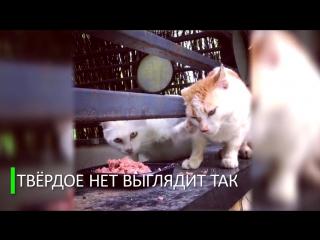 Кот не захотел делиться обедом