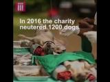 Удивительные люди. Дженни-ветеринар бесплатно лечит уличных собак на Шри-Ланке