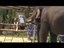Слон-художник