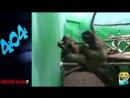 Прикольные животные - Смешная подборка видео про животных @Животные_low