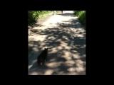 Кот из Горловки разорвал собаку в Артемовске