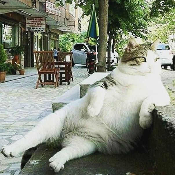 Памятник знаменитому коту Томбили, любившему сидеть в необычной позе, оперевшись на бордюр (Kadıköy, Istanbul). Памятник был установлен после смерти кота, был украден и поставлен вновь.