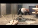 Панда манда