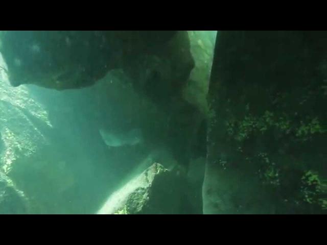 Гурзуф подводный представляет Погужение на Аю-Даге.