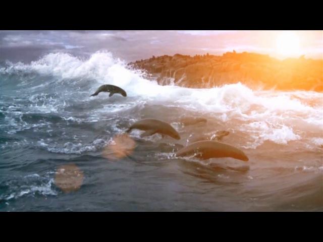 The Ocean Oxygene by JJc