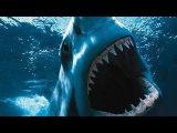 Большая белая акула. Атака акулы. Документальный фильм.